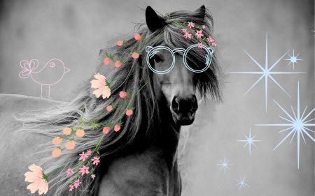 pferdeshampoo